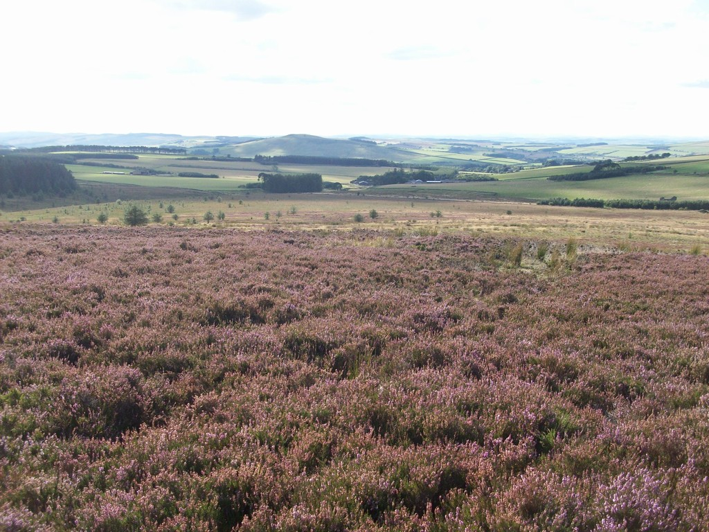 •A block of open moorland•Good road side access•Planting potential•In total extending to approximately 379.78 acres (153.69 hectares)