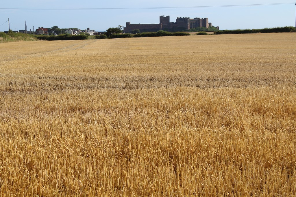 A block of highly productive arable and grassland extending to approximately 228.62 acres, near to the Northumbrian Coast.