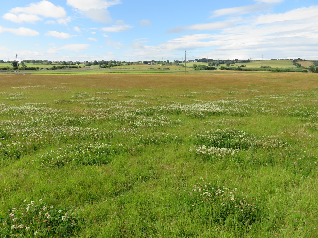 An excellent opportunity to purchase an attractive block of grassland, which benefits from planning permission for an agricultural storage building, situated in an accessible and desirable location in South Hetton. The land extends to 13.90 acres (5.62 ha) in total. For sale as a whole by Private Treaty.